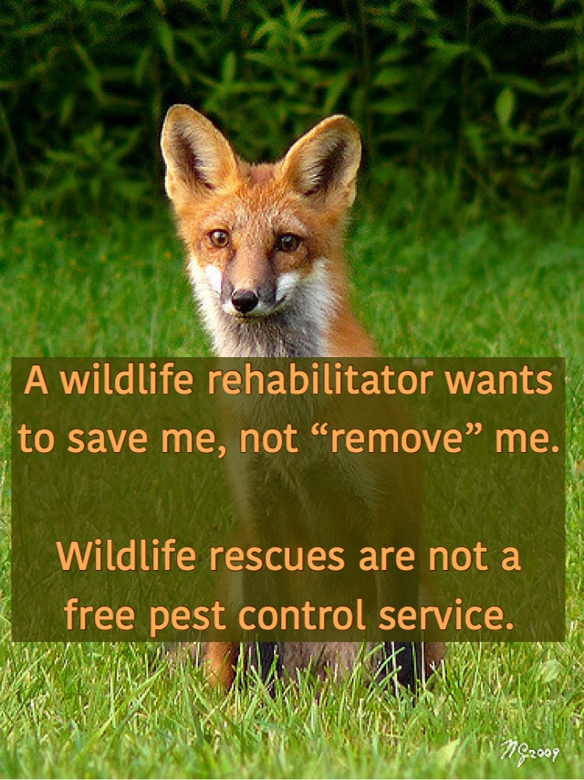 Wildlife rescues aren't a free pest control service.