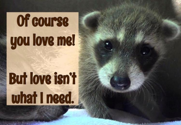 Wild Animals Don't Need Love