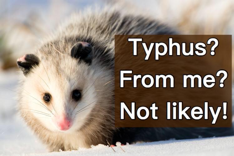 Typhus? From me?