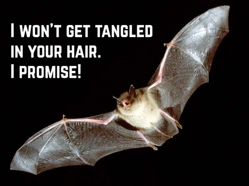 I won't get tangled in your hair! I promise!