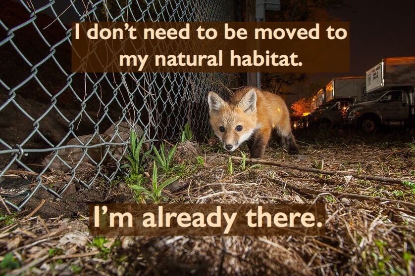 I don't need to be moved to my natural habitat. I'm already there.
